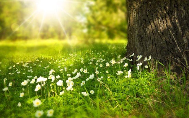 Tuinonderhoud met boom en bloemen